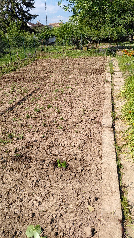 das Feld ist bepflanzt